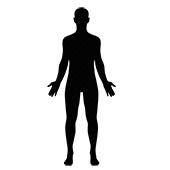 МРТ всего тела